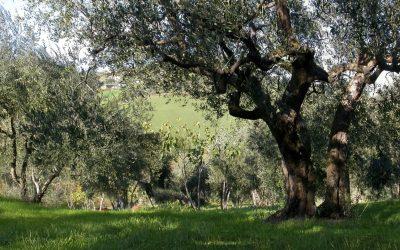 """L'orazione di Getsemani  è il primo esempio di una vera """"preghiera del cuore""""…"""